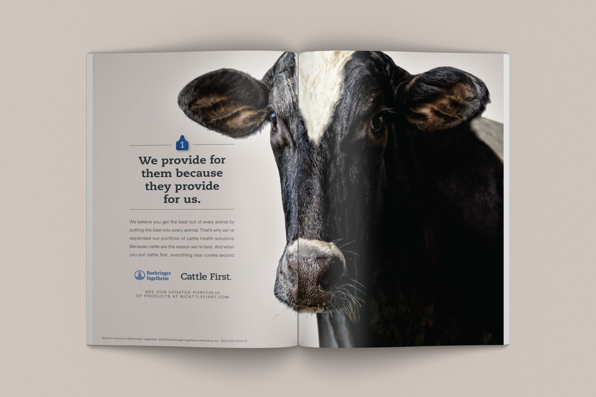 Cattle First print ad with dairy cow