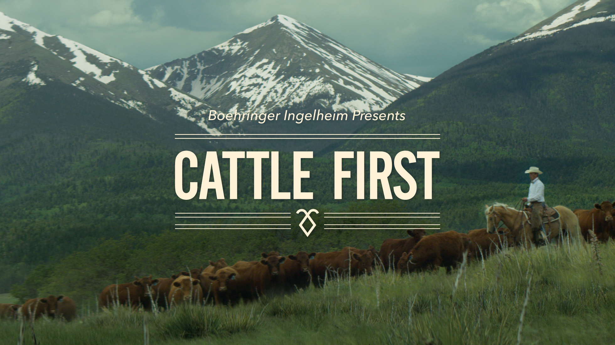 Cattle First documentary titlecard